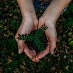 Sustainability & Strategic Advisory